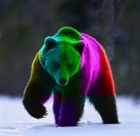 View Technicolor_Bear's Profile