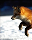 View foxyy's Profile