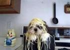 View Spaghetti's Profile