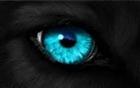 View Livwolf's Profile