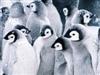View Penguinturtle13's Profile