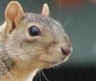 View omni_squirrel's Profile