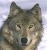 View Wolf_Of_Night7964's Profile