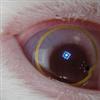 View MineCrak's Profile