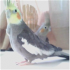 View Pro_Ogidy's Profile