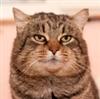 View MrDoroh's Profile