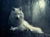 View WhitewolfGaming's Profile