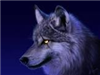View MCwolfie's Profile