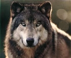 View WolfIronThorn's Profile