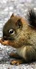 View MiniSquirrelz's Profile