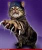 View slashercat's Profile