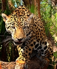 View Jaguar339's Profile