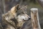 View Einsamen_Wolf's Profile