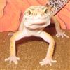 View simtendo's Profile