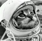 View Spacecat8192's Profile