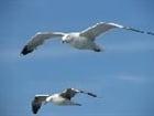 View Seagulls's Profile