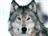 View Shadowwolf0621's Profile