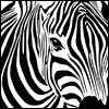 View zebra's Profile