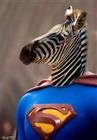View SuperZebra23's Profile