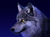 View lcswolf's Profile