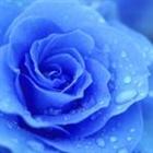 View BlueroseSyn's Profile