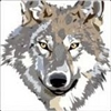 View Wolf1375's Profile