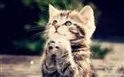 View TheMr_Kitten's Profile