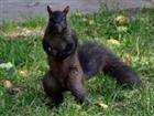 View crazedsquirrel's Profile