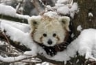 View Pandacraft752's Profile