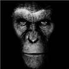 View Hairless_Apes's Profile