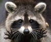 View speed_Racoon's Profile