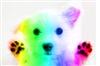 View RainbowPuppy152's Profile