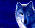 View lone_wolf5150's Profile