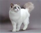 View CatTNT's Profile