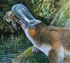 View obdurodon's Profile