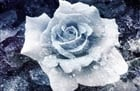 View FrozenRose600's Profile