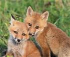 View Fire_fox00996's Profile