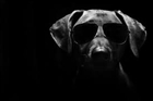 View DogDaysisBOSS's Profile