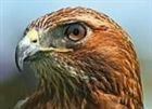 View redhawk39's Profile