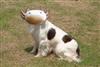 View Dogstalotl's Profile