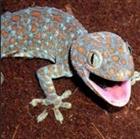 View Geckoleon's Profile