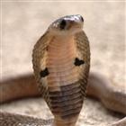 View Azlech's Profile