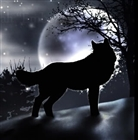 View Dubh_Wolf's Profile