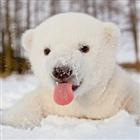 View The_MCForum_Bear's Profile