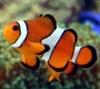 View clownfish888's Profile