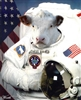 View spacesickcows's Profile