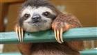 View Sloth_boi_9000's Profile