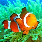 View Clownfish's Profile