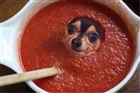 View Pomidor's Profile