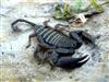 View Scorpion777's Profile